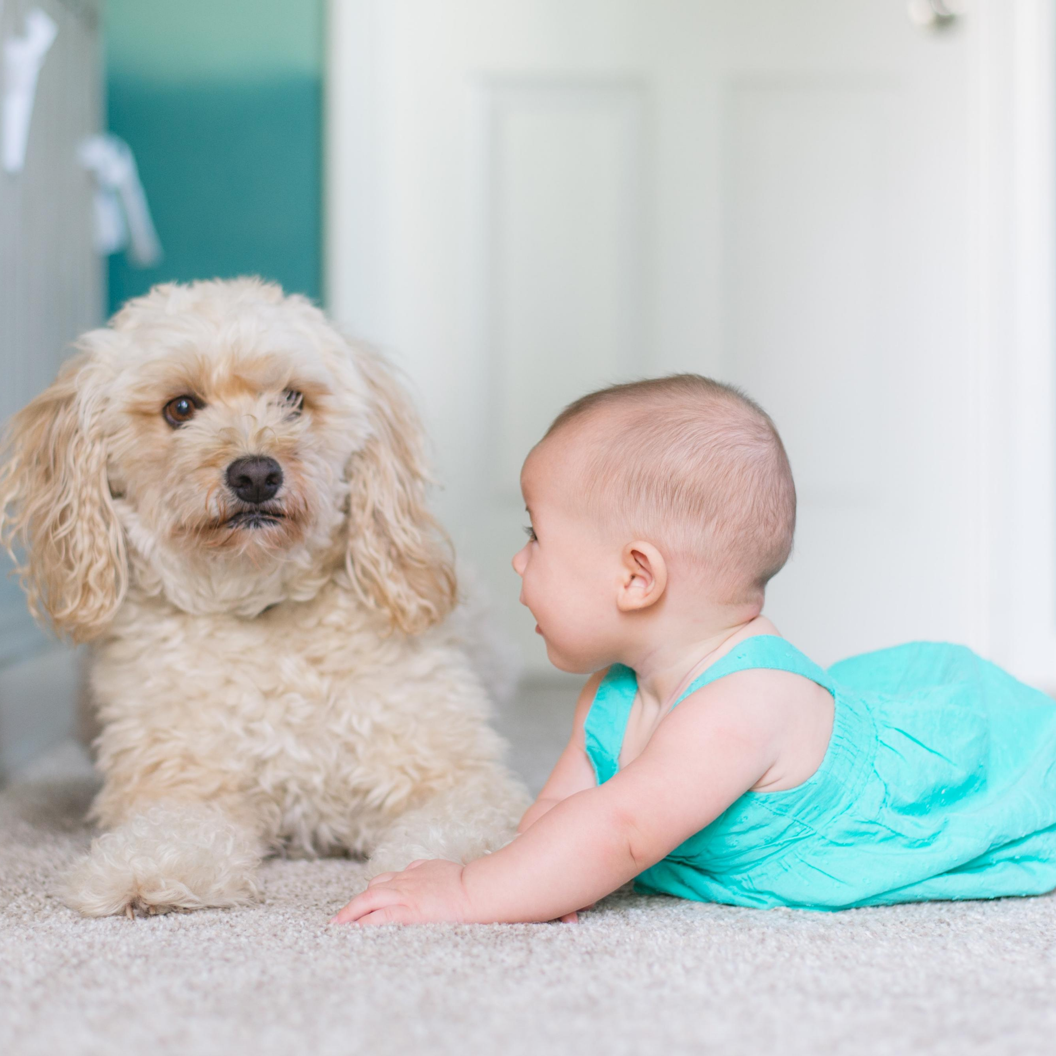 4 Reasons to get your carpet professionally cleaned regularly!